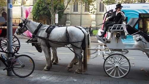 horse-drawn carriages 2.jpg