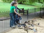 watelow park duck ponds2.jpg